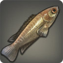 Climbing Perch - Fish - Items