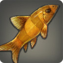 Golden Loach - Fish - Items